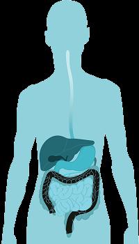 Guidance On Probiotics >> Probiotic Chart